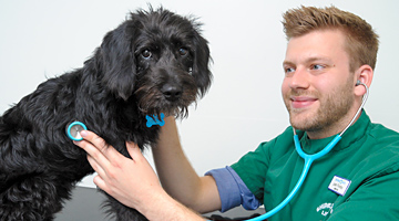 Shires Small Animal Vets